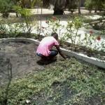 Trädgård och Fastighets skötsel.